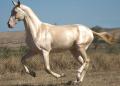 Atların türk kültüründeki yeri ve önemi konulu bir araştırma yapınız